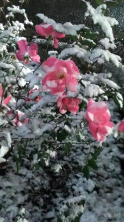 Tem seus dias de neve